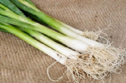Onion Guardsman - Spring onion - Appx 200 seeds